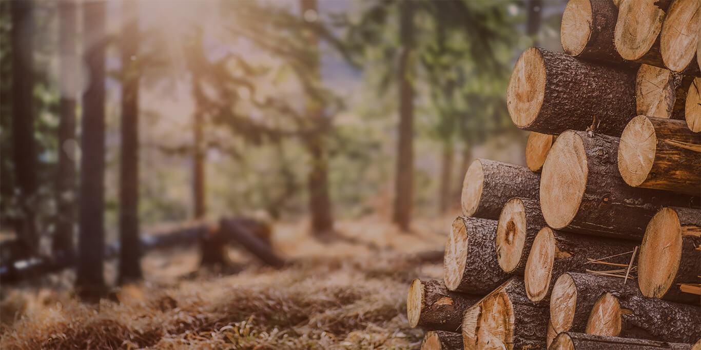 Wiązary drewniane